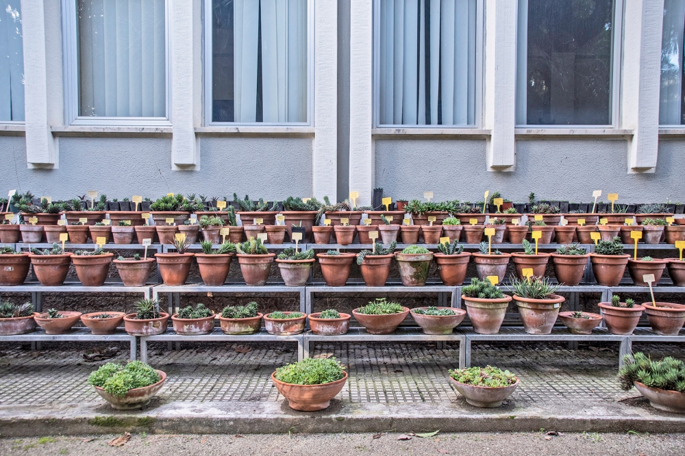 giardini di prossimità di cut | circuito urbano temporaneo e riciclidea, prato, vincitore creative living lab mibac 2018, foto di simone ridi 2