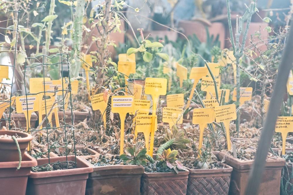 giardini di prossimità di cut | circuito urbano temporaneo e riciclidea, prato, vincitore creative living lab mibac 2018, foto di simone ridi 7